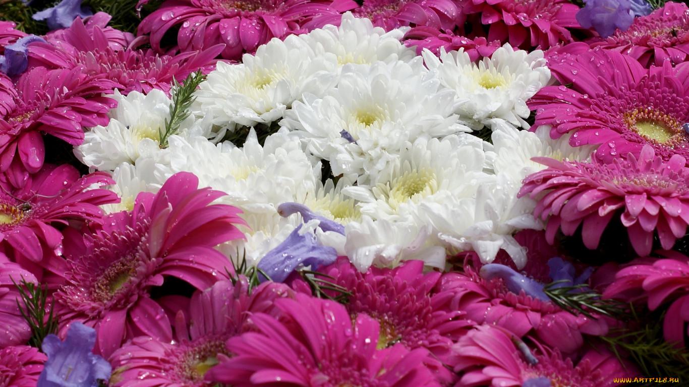 цветы, разные, вместе, хризантемы, герберы